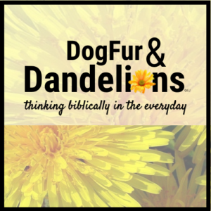 DogFur & Dandelions | Thinking Biblically in the Everyday